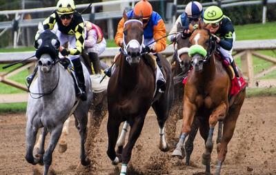 Qatar horse racing betting